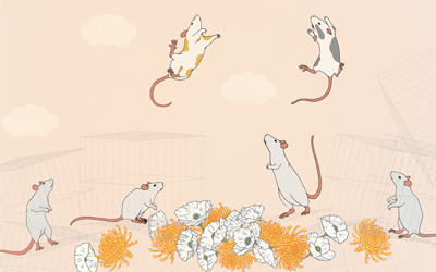 Jessica Gross: Ecce Rat